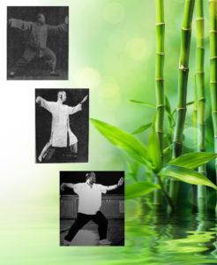 Yang Style Comparative Study