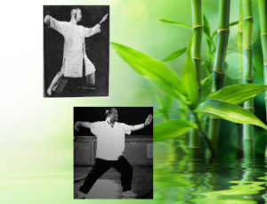 Yang Style Tai Chi Comparison